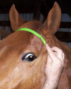 basic browband measurement