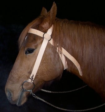 the bridle on toby