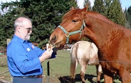 photo of my husband feeding horsebread to October Dawn